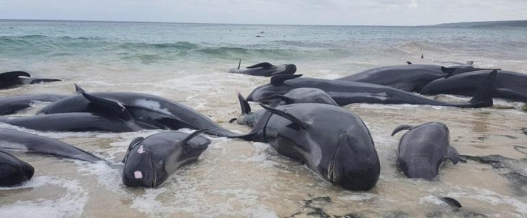 Вымирание животных в океане